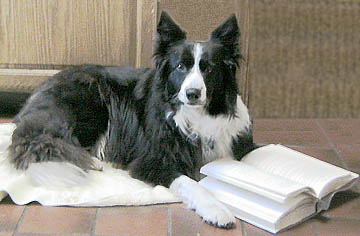 Bookstore the shepherds dog books spiritdancerdesigns Image collections